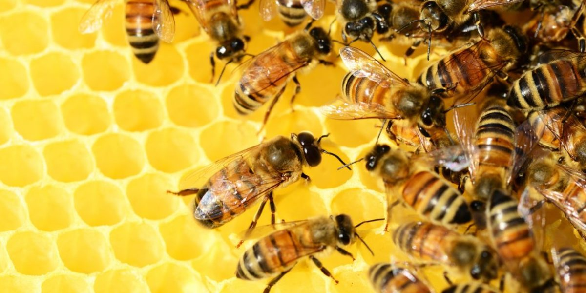 APICULTURE/ KEEPING HONEYBEES