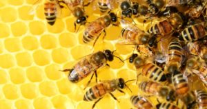 WHAT IS APICULTURE/ KEEPING HONEYBEES?